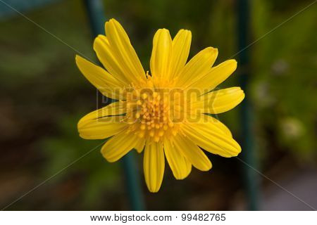 Flor Suspensa