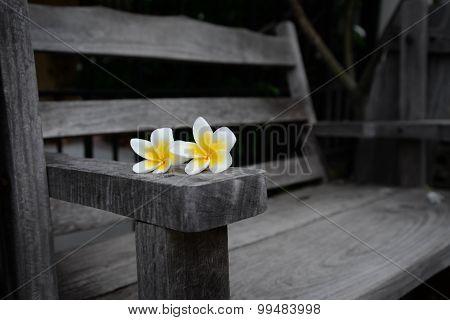 Plumeria Flowers On Wooden Bench