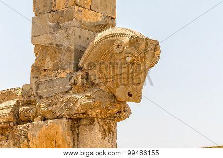 Taurus head Persepolis