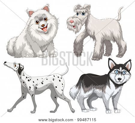 Different kind of canine illustration