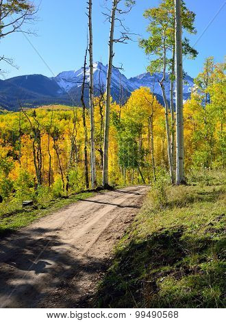 Road Though The Forest Of Yellow Aspens During The Foliage Season