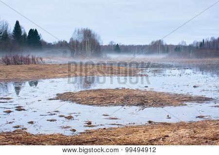 Duck Swamp