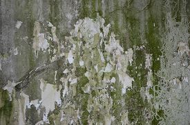 pic of green algae  - crack concrete wall with grunge texture and moss green algae  - JPG