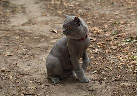 pic of castration  - Cat on a walk in the park