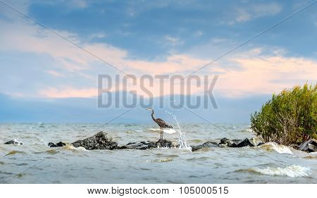 Great Blue Heron Standing On Jetty With Water Splashing