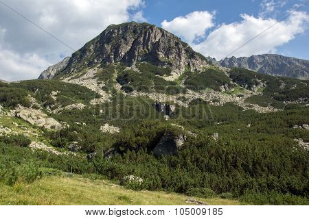 Landscape of Green forest in Pirin Mountain