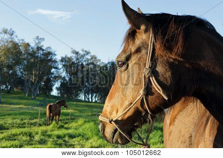 A Horses Watchful Eye On His Buddy
