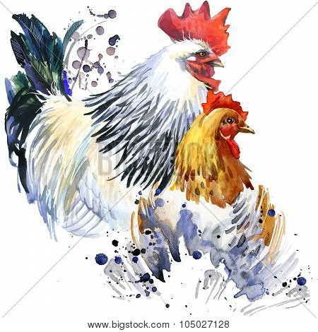 rooster and chicken illustration with splash watercolor textured background.