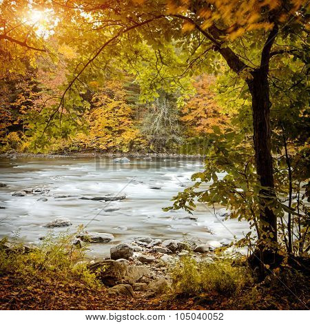 Beautiful autumn forest with long exposure flowing river