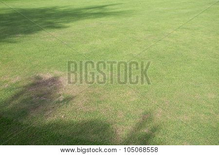 Green Grass Field Of Sport Playing Area