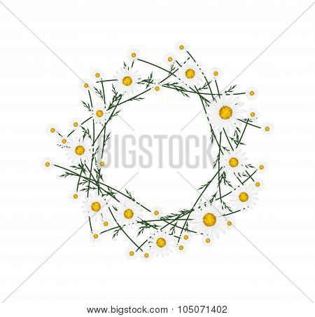 Beautiful White Daisy Wreath on White Background