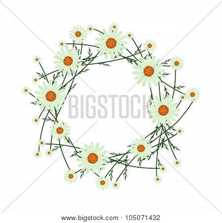 Beautiful Light Green Daisy Wreath on White Background
