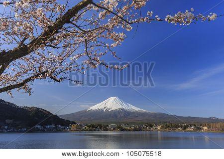 The Sacred Mountain - Mt. Fuji At Japan