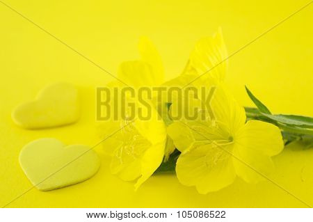 Yellow Flowers On Yellow Background