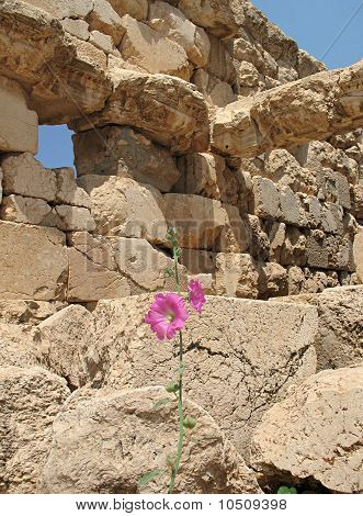 Ruins and Hibiscus