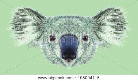 Illustrative Portrait of Koala Bear.