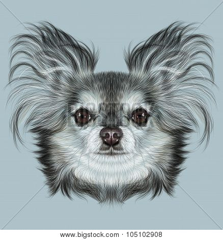 Illustrative Portrait of Chihuahua dog.