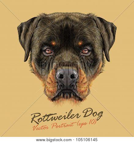 Vector Illustrative portrait of Rottweiler Dog