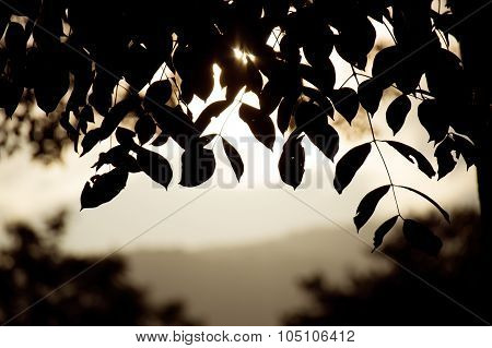 Close up Leaf Backlit Silhouette and Mountain