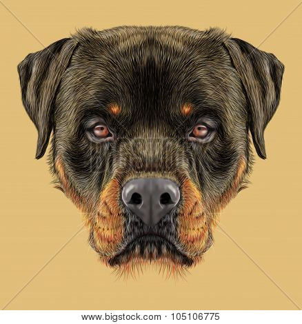 Illustrative portrait of Rottweiler Dog.