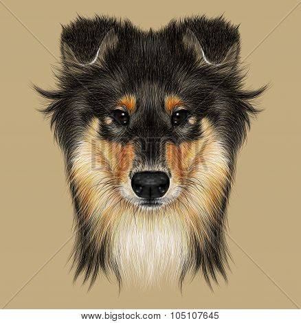Illustrative Portrait of Collie Dog.