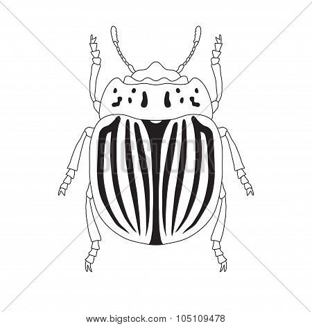 colorado potato beetle. Leptinotarsa decemlineata. Sketch of colorado potato beetle.  colorado  beet