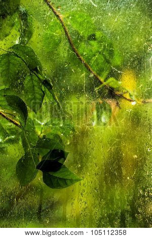 Green Leaves On Rainy Window