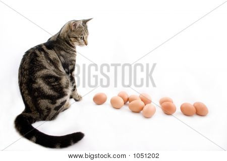 Cat Watching Eggs