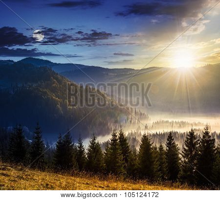 Conifer Forest  In Mountains
