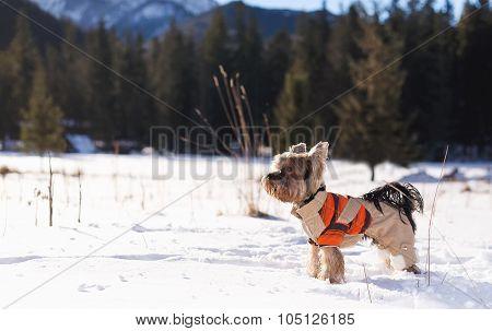 Dog in winter.