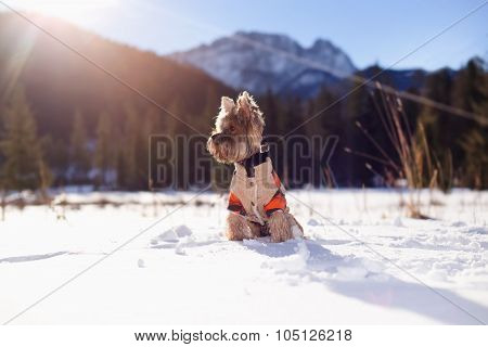 Dog in winter.