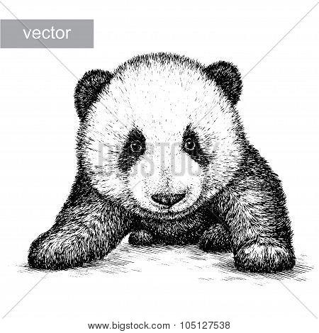 engrave panda bear illustration