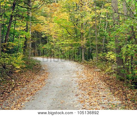 Secluded walking trail going into the woods.  Beautiful trees with autumn colors of yellow, green an