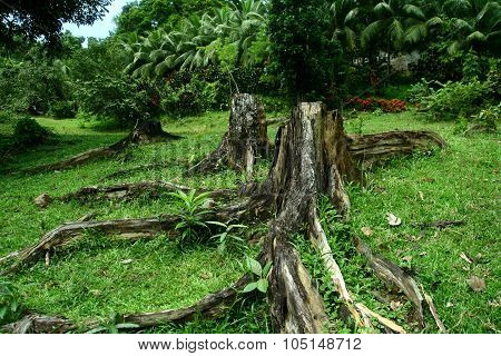 Tree stumps in a field with fresh green grass