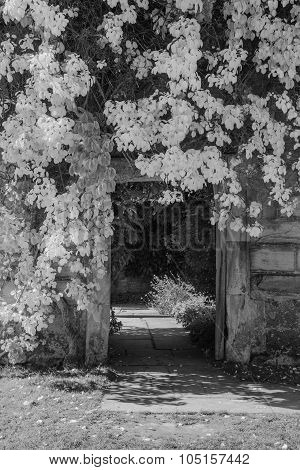 Beautiful Black And White Landscape Of Foliage Covering Doorway Into Garden Of Old Ruined House