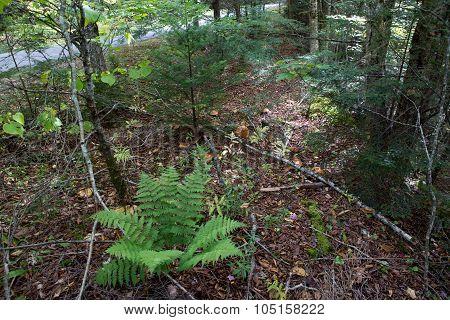 Autumn Forest Ground