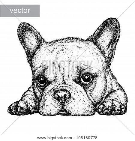 engrave dog illustration