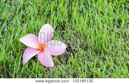 The Beauty Pink Flower In Home Garden