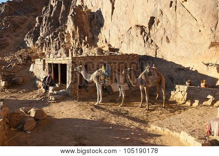 Bedouin dwelling in the mountains of the Sinai Peninsula, Egypt