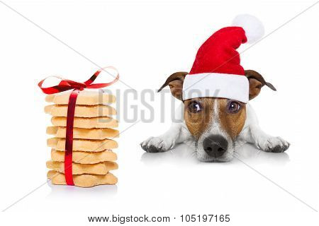 Christmas Dog And Cookies