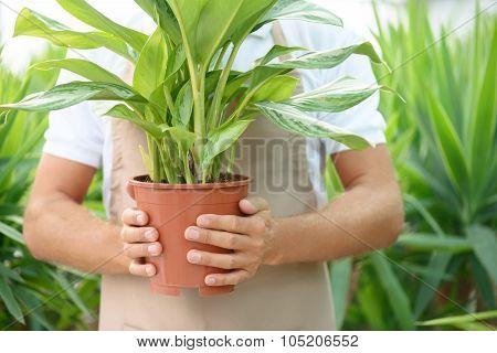 Nice florist holding flower pot