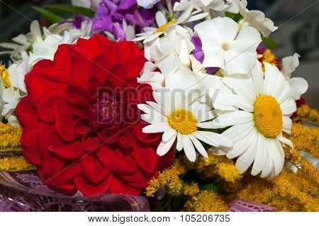 Daisy And Chrysanthemum