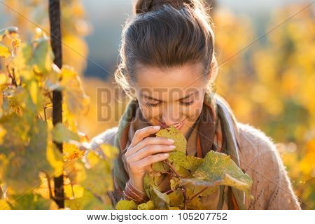Woman Winegrower Inspecting Grape Vines In Autumn Vineyard