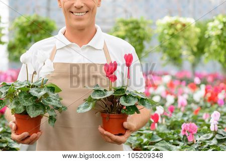 Professional florist working in the greenhouse