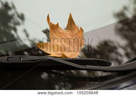 Dry leaf on a car window
