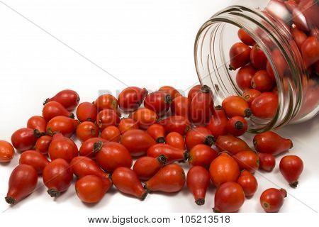 Closeup of rose-hip berries