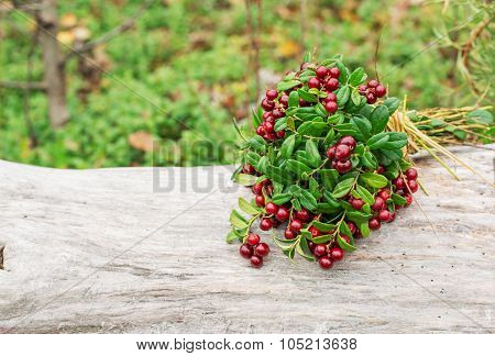 Ripe wild lingonberries associated in a bouquet on old wooden background
