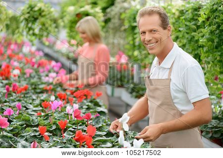 Nice florists working in the greenhouse