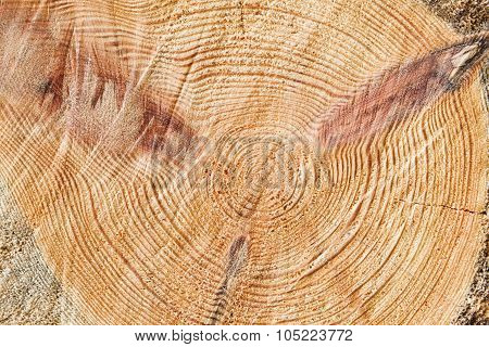 Fresh Wooden Log Section Close-up Photo Texture