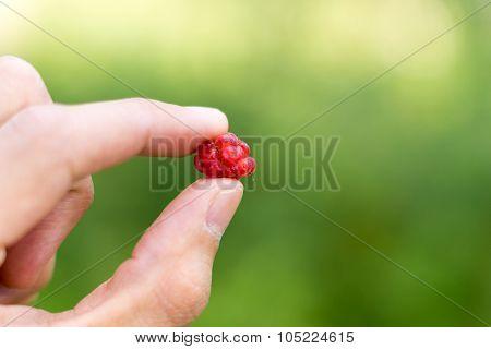 Red Raspberry between fingers